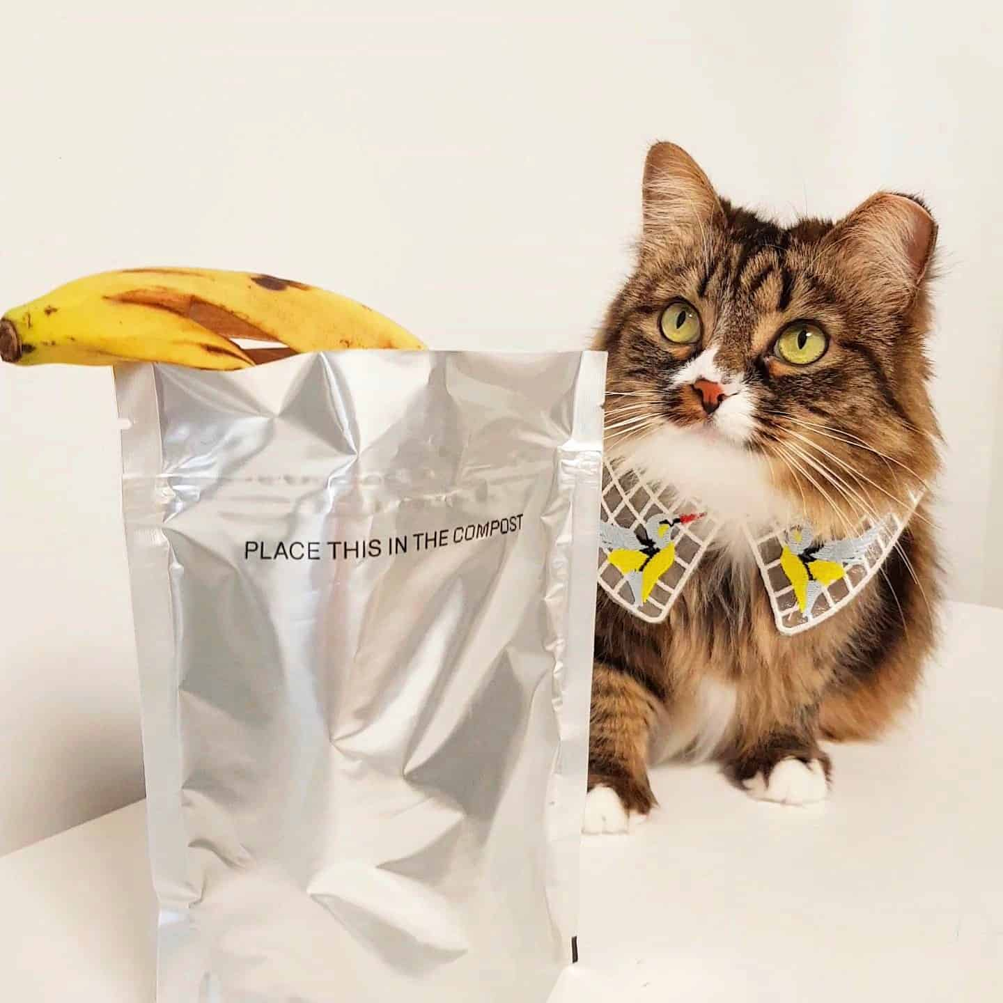 Cat Pet Compostable Packaging