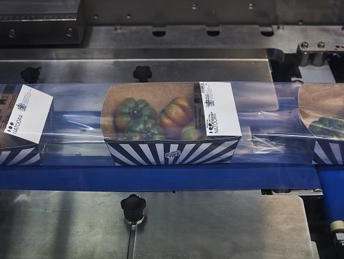 TIPA Packaging on ULMA machine wrapping Natoora tomatoes in punnet