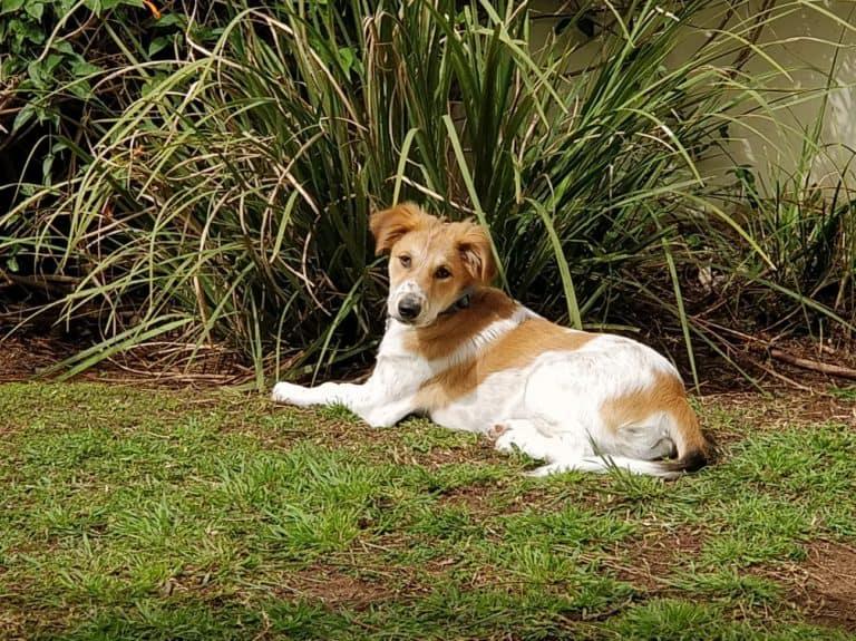 Dog Raising Pets Sustainably